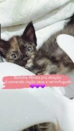 Gatinhos pra doação em Arapiraca