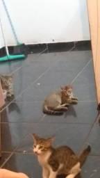 Adoção de gato