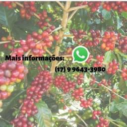 Adubo NPK 20-05-20 líquido para café