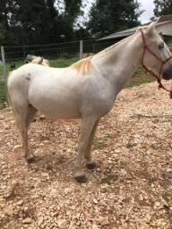 Vendo cavalo com cela valor no dinheiro aceito proposta