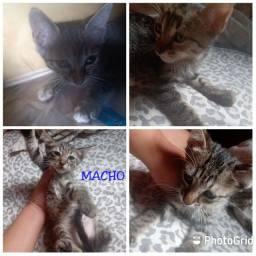 Doação responsável de gatos