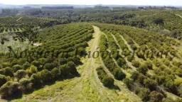 Fazenda com 300 alqueires na região (Nogueira Imóveis Rurais)