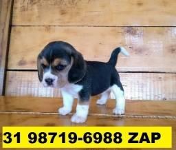 Canil Filhotes Cães Top BH Beagle Poodle Yorkshire Lhasa Shihtzu Bulldog Pug