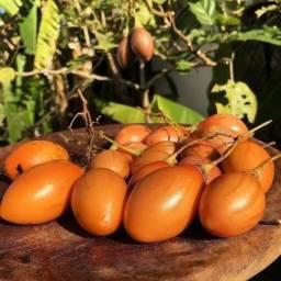 Tamarillo - Mudas, Sementes e Frutos
