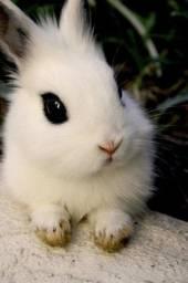 Mini coelhos Puros