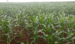 Linda fazenda de soja com 350 alqueires na região de Caarapó Ms