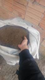 Esterco de peru, casca de arroz carbonizada