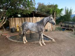 Cavalo Paulista Sela e Charrete