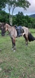 Égua mansa para criança