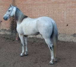 Cavalo MM registrado oportunidade