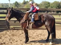 Cavalo Crioulo égua