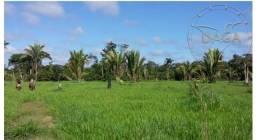 Mega Fazenda a venda no Mato Grosso divisa com Rondonia 100 mil HA