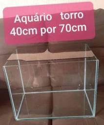 Aquario  torro