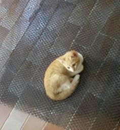 1 gatinha amarela para ADOÇÃO