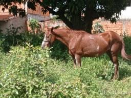 Vendo cavalo mm picada