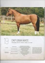 Cavalo, Égua Crioula Mansa Registrada