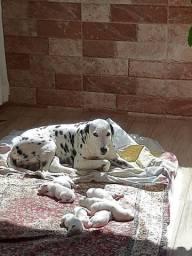 Doguinhos nascidos em 19 de agosto