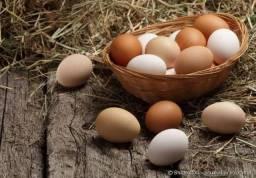Ovos galinha caipira