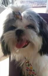 Procura -se uma Namorada para meu cachorro