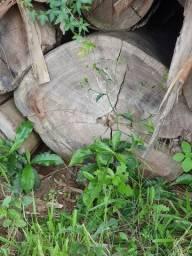 Toras de eucalipto saligno em cesario lange