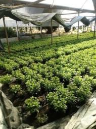 Decoraçao paisagismo terra preta preparada plantaçao