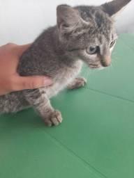 Gatos para doação urgente