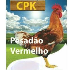Vendo frango Caipira - Pesadão Vermelho