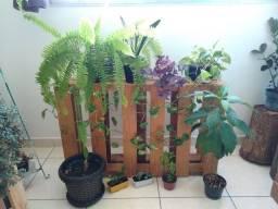 Plantas naturais + pallet base - PROMOÇÃO
