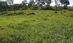 Fazenda 5,5 alqueires Mun Pirenópolis