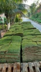 Vendemos e Plantamos todos os tipos de Grama