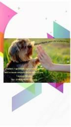 Hospedagem para cães de pequeno porte