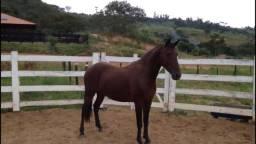 Oportunidade Vendo Cavalos MM