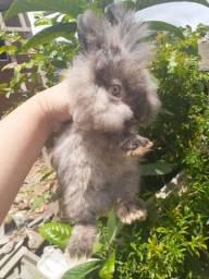 Mini coelho fuzilope