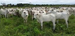 90 alqueires ou 430 hectares 900 mil reais no Estado do Pará zap (91)988697836