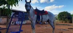 Ótimo cavalo a venda!