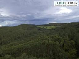 2024/Fazenda de 63,5 ha com 43 ha de eucalipto em ponto de corte