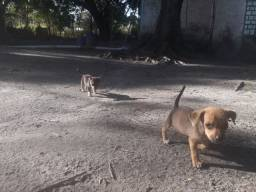 Filhotes  de cachorro para doação!