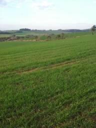 28 hectares para soja - Miraguaí R/S
