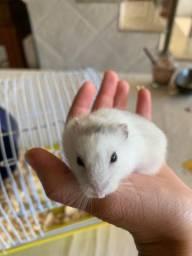 Vendo hamster com gaiola