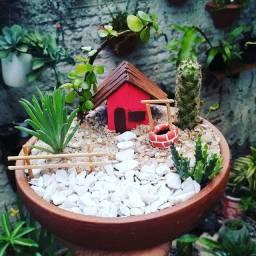 Mini jardim na bacia de barro