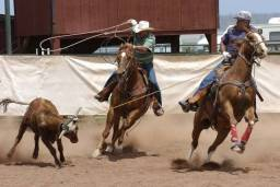 Cavalos de laço cabeça e pé