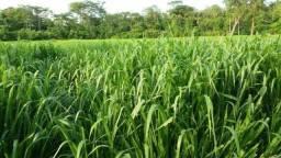Vende Fazenda em Palmas-TO. 25mil a vista e 30 permuta o alqueire