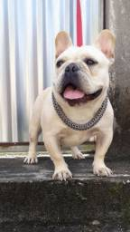 ENFORCADORES DE INOX STEEL DOG
