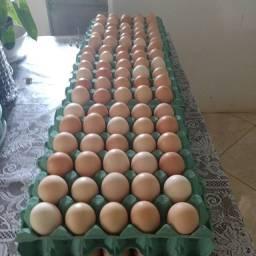 Vendo ovos legitimo  caipira