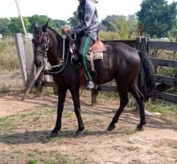Égua Pretta
