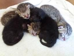 Filhotes de gato doação