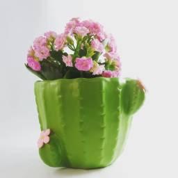 Vaso Formato Cacto