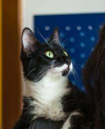 Adoção responsável gatinho