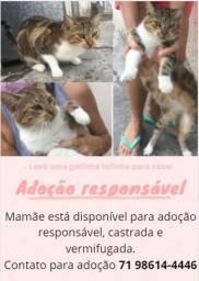 Adoção responsável gatinhos
