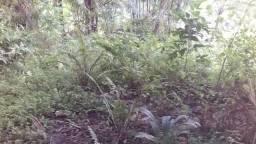 Terrenos loteados